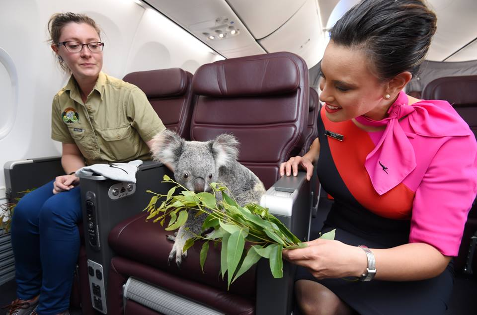 Only the highest quality of eucalyptus is served on Qantas (Image: facebook.com/Qantas)