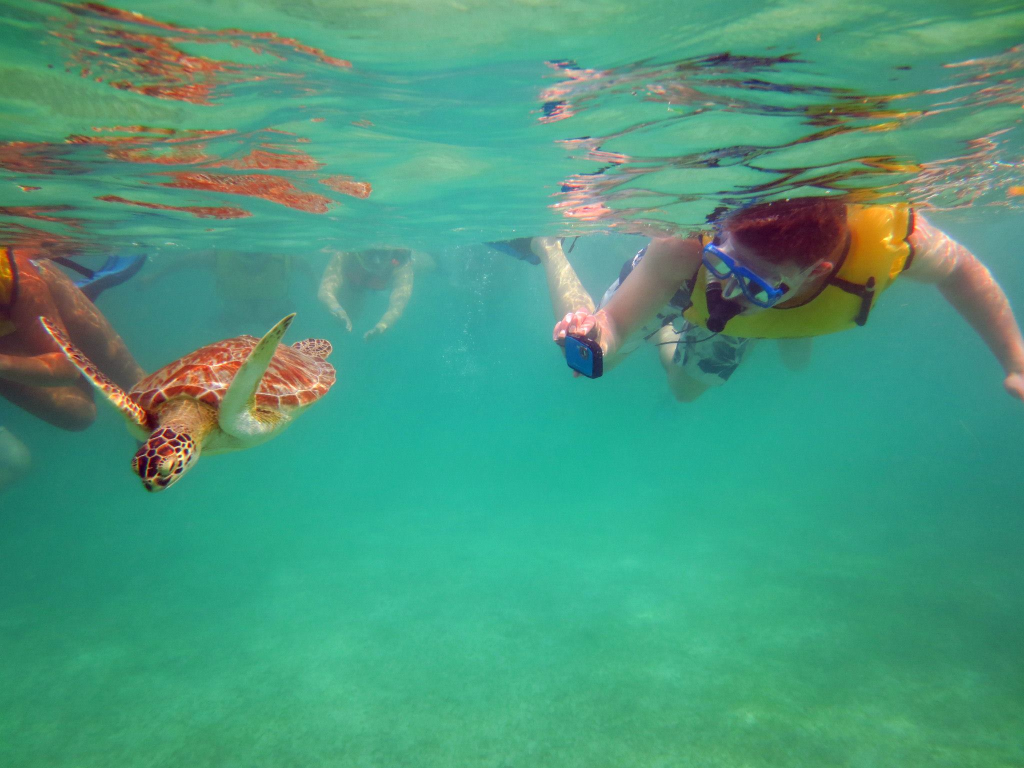 Turtles at Akumal Beach. © Alexandra Gregg/Brad Cronin