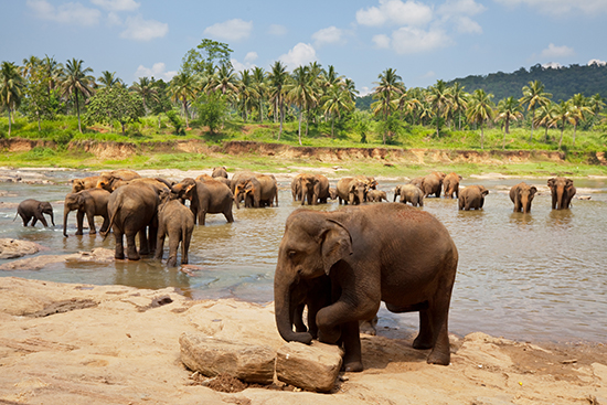 Elephant sightings are frequent in Sri Lanka