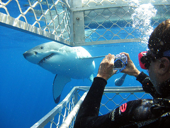 Shark cage diving in the Eyre Peninsula