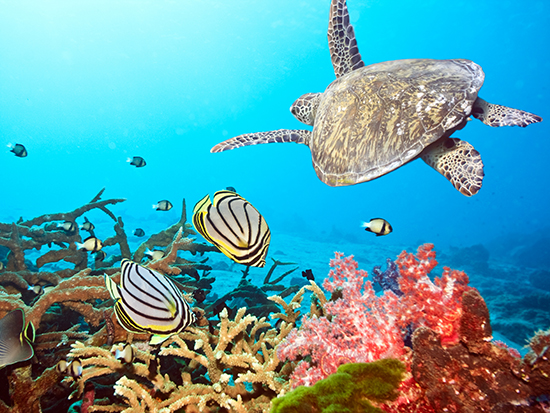Underwater safari in the Maldives