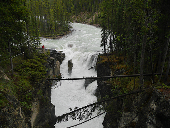 Sunwapta Falls, just off the Icefields Parkway (Image: Alexandra Gregg)