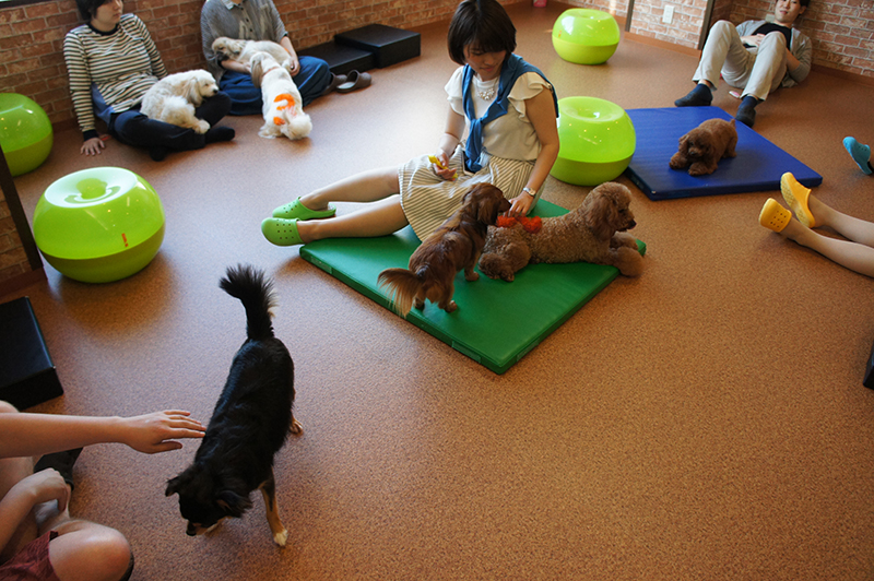 Inside the Dog Cafe in Osaka (Image: Lauren Burvill)
