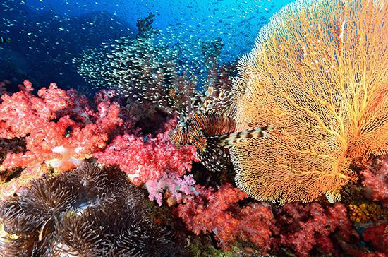 RS 3 Similan Islands shutterstock_142559464