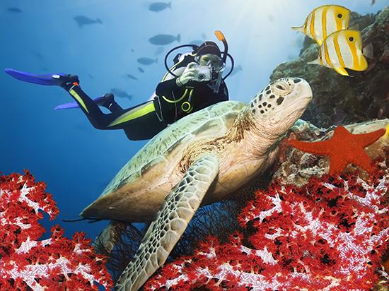 RS 5 Turtle Sipadan shutterstock_28087501
