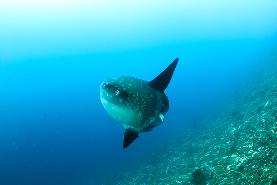 RS 6 Sunfish shutterstock_220745173