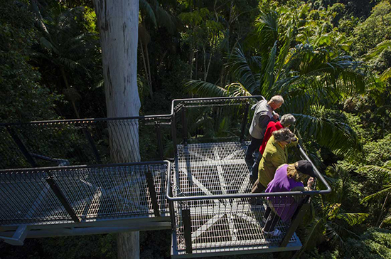 Walk through the treetops (Image: Tamborine Rainforest Skywalk)