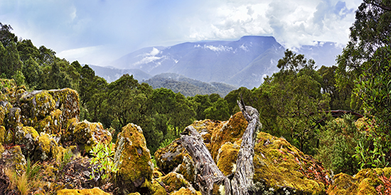 Barrington Tops National Park, one of the 40 National Parks along the Legendary Pacific Coast