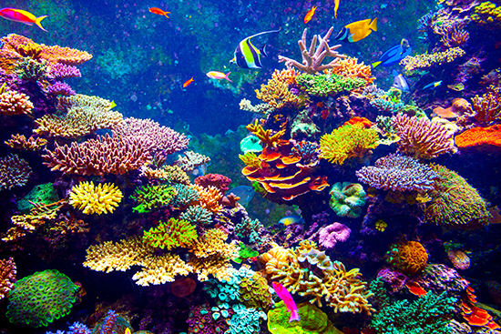 RS Bahamas corals shutterstock_243413140