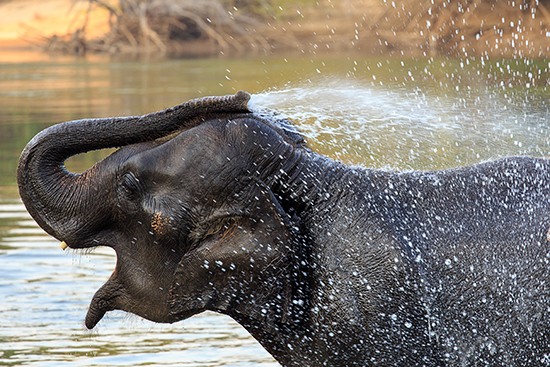 Elephant in Kanchanaburi