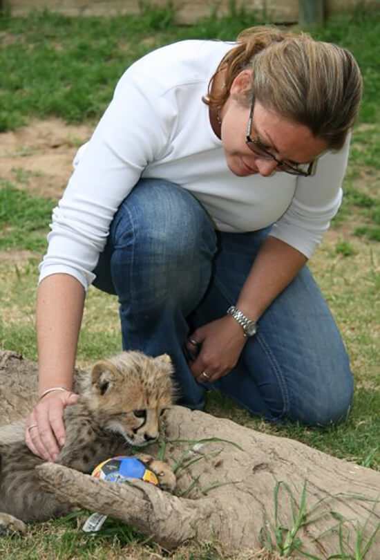 Becky stroking a cheetah cub on her travels (Image: Becky Greaves)