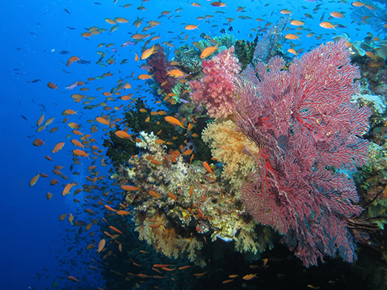 RS Coral reef in Fiji