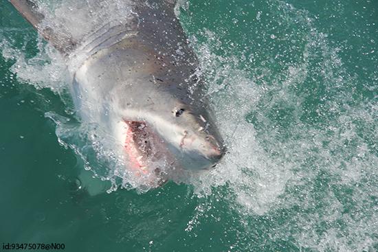Shark dive (Image: Flickr/Joepyrek)