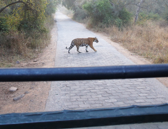 The incredible view from our jeep on safari in Ranthambore