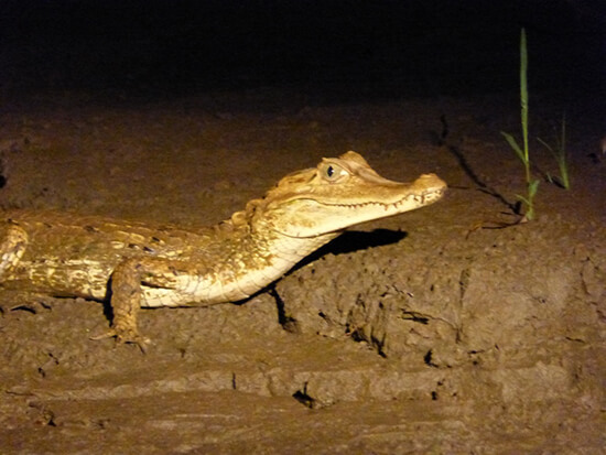 On a caiman-spotting cruise (Image: Catriona Scott)