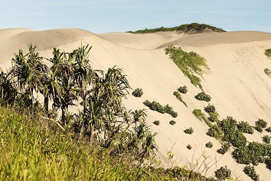 The sand dunes of Sigatoka