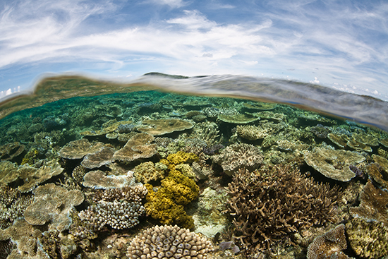 Snorkelling off Kadavu