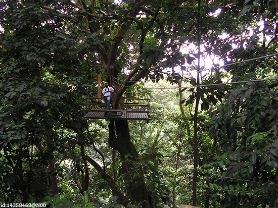 Treetop Adventure Walk, St Lucia