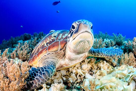 Go diving in Malaysian Borneo