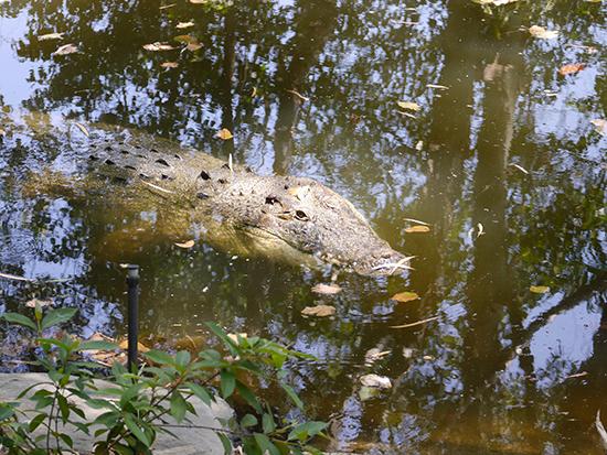 RS Crocs