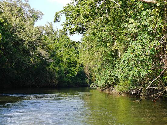 Daintree River  (Image: Alexandra Gregg)