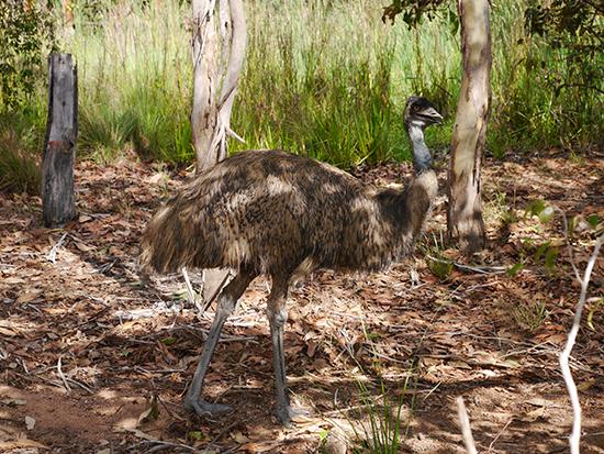 RS Emu