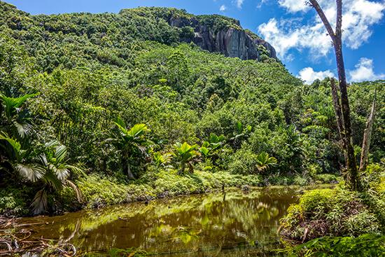 Morne Seychellois pond