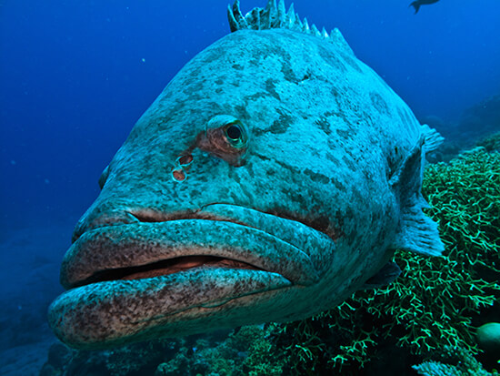 RS Potato cod - shutterstock_41937406