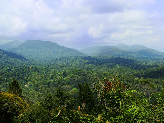 Explore rainforest like Taman Nagara in Peninsular Malaysia