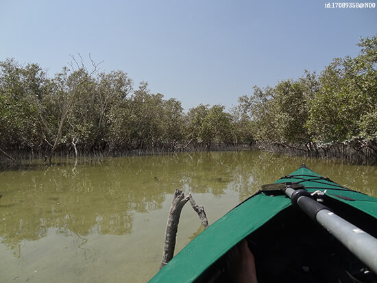 Eastern Mangroves National Park