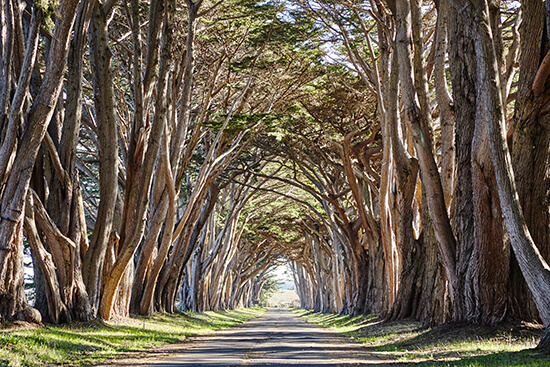 RS Cypress Tree Tunnel shutterstock_250551928