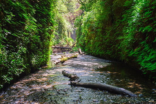 RS Fern Canyon - shutterstock_295472438