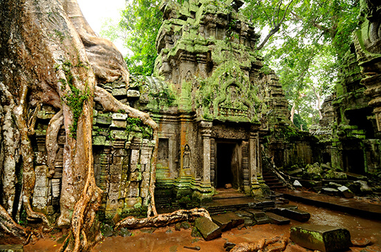 RS Ta Prohm temple - Angkor Wat