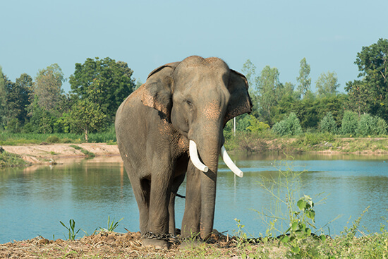 The sanctuary rehabilitates many species, including the Asian elephant