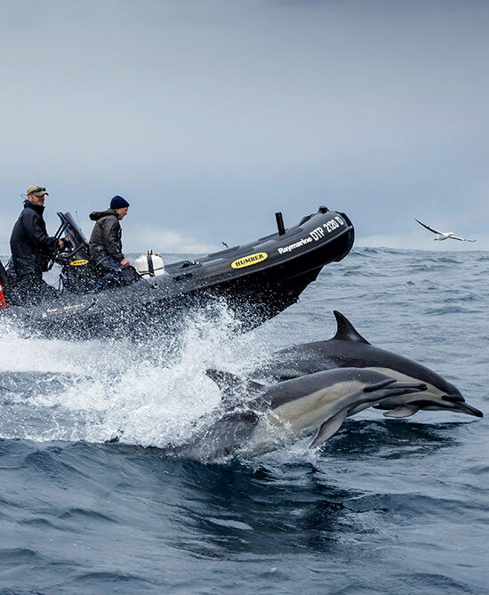Monty and his crew chasing dolphins and whales