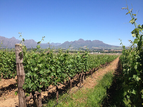 Cape Winelands image: Claus Gurumeta