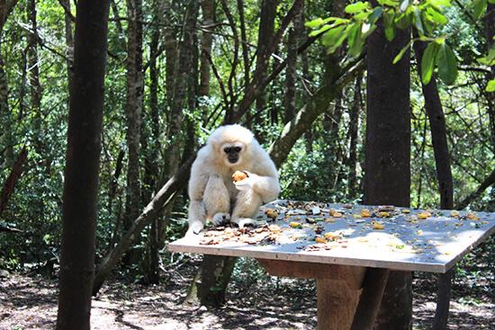 Monkeyland, Plettenberg Bay image: Claus Gurumeta