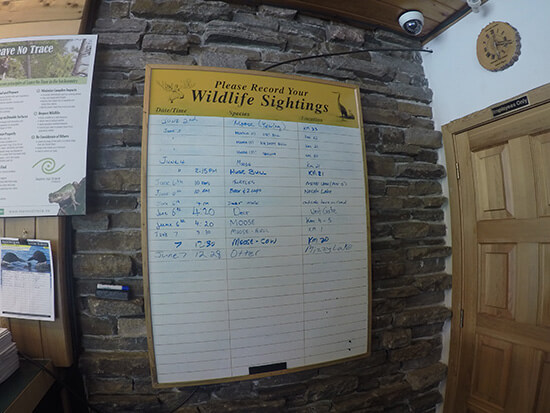 Algonquin's moose-heavy wildlife sightings board (image: Angela Griffin)