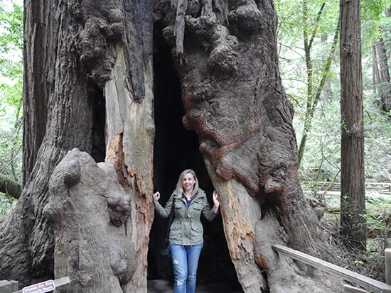 Alex inside a tree at Muir Woods (image: Bradley Cronin)