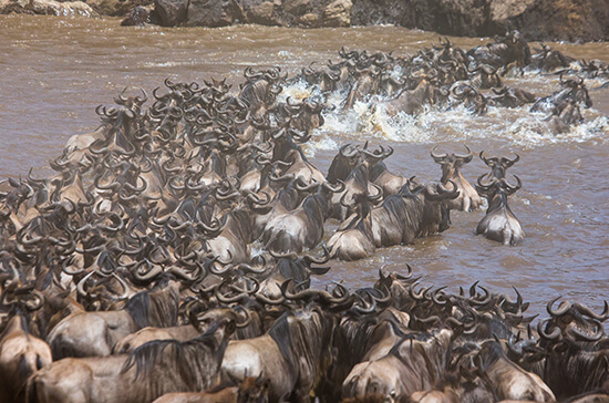 Great Migration in Tanzania