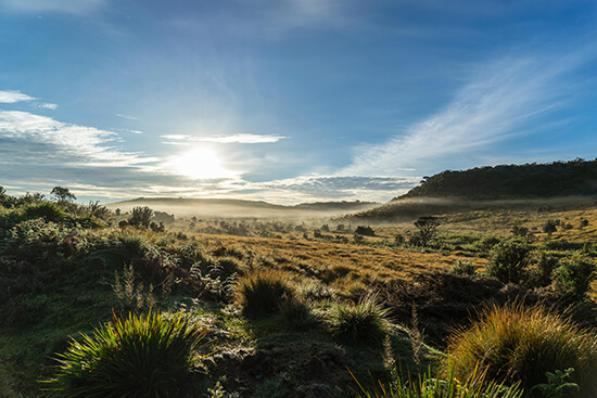 The sunrise on Horton Plains (image: Ross Jennings)