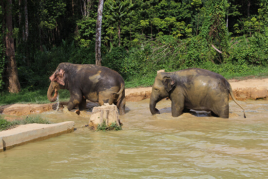Elephants at Elephant Hills (image: Helen Winter)