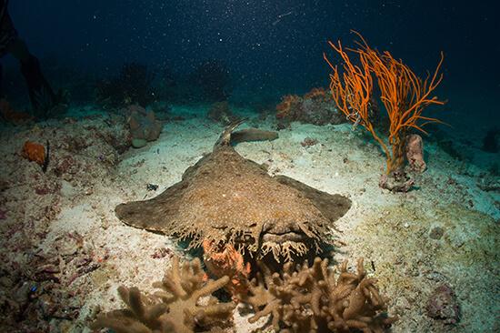 Woobegong shark