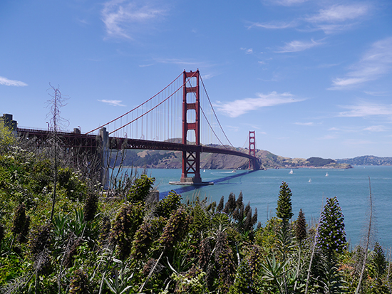 Golden Date Bridge (image: Alexandra Gregg)
