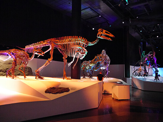 Dinosaurs in the Houston Museum of Natural Science (image: Alexandra Gregg)