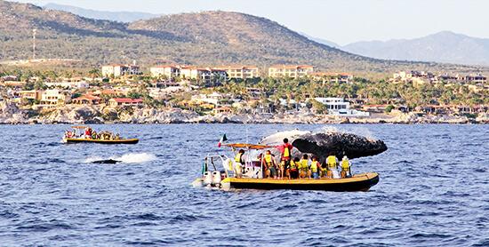 Whales in Los Cabos