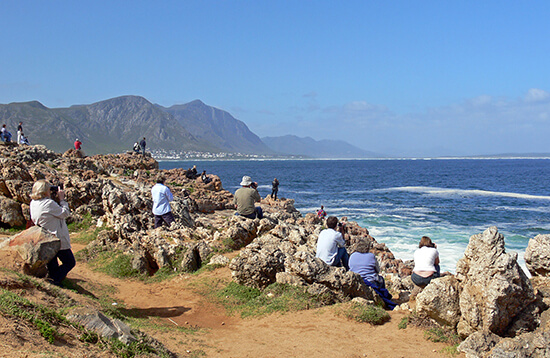 Whale watching from the coast in Hermanus, South Africa