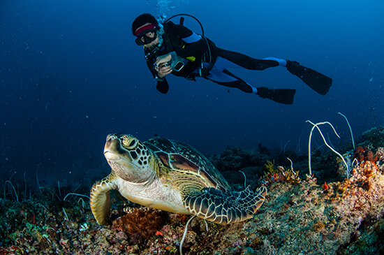 Get up-close with turtles in Indonesia