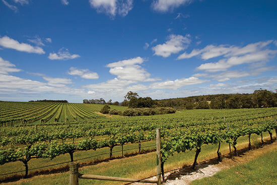 Vineyards in Margaret River