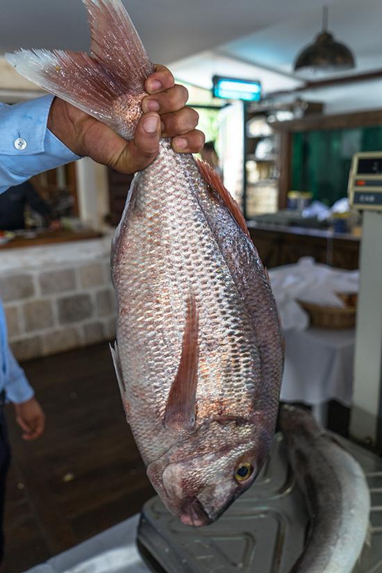 Fish at Ribaski Selo (image: Ross Jennings)